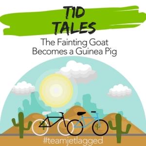 T1D Tales - Fainting Goat